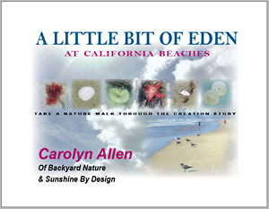 Little Bit of Eden at California Beaches | Carolyn Allen