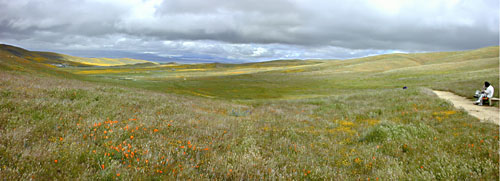 California Poppy Reserve