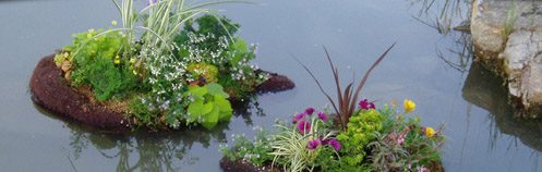 island of aquatic plants