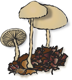 backyard lawn and garden plants including mushrooms in forestry and urban natural areas